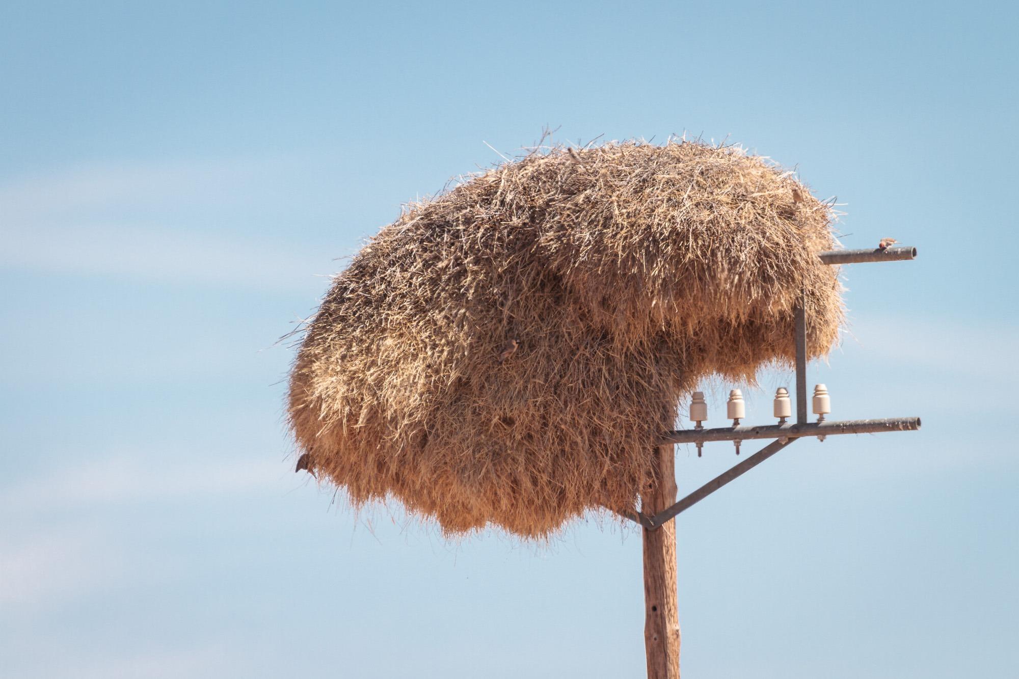 Webervogelnest am Strassenrand im Strommasten in Namibia