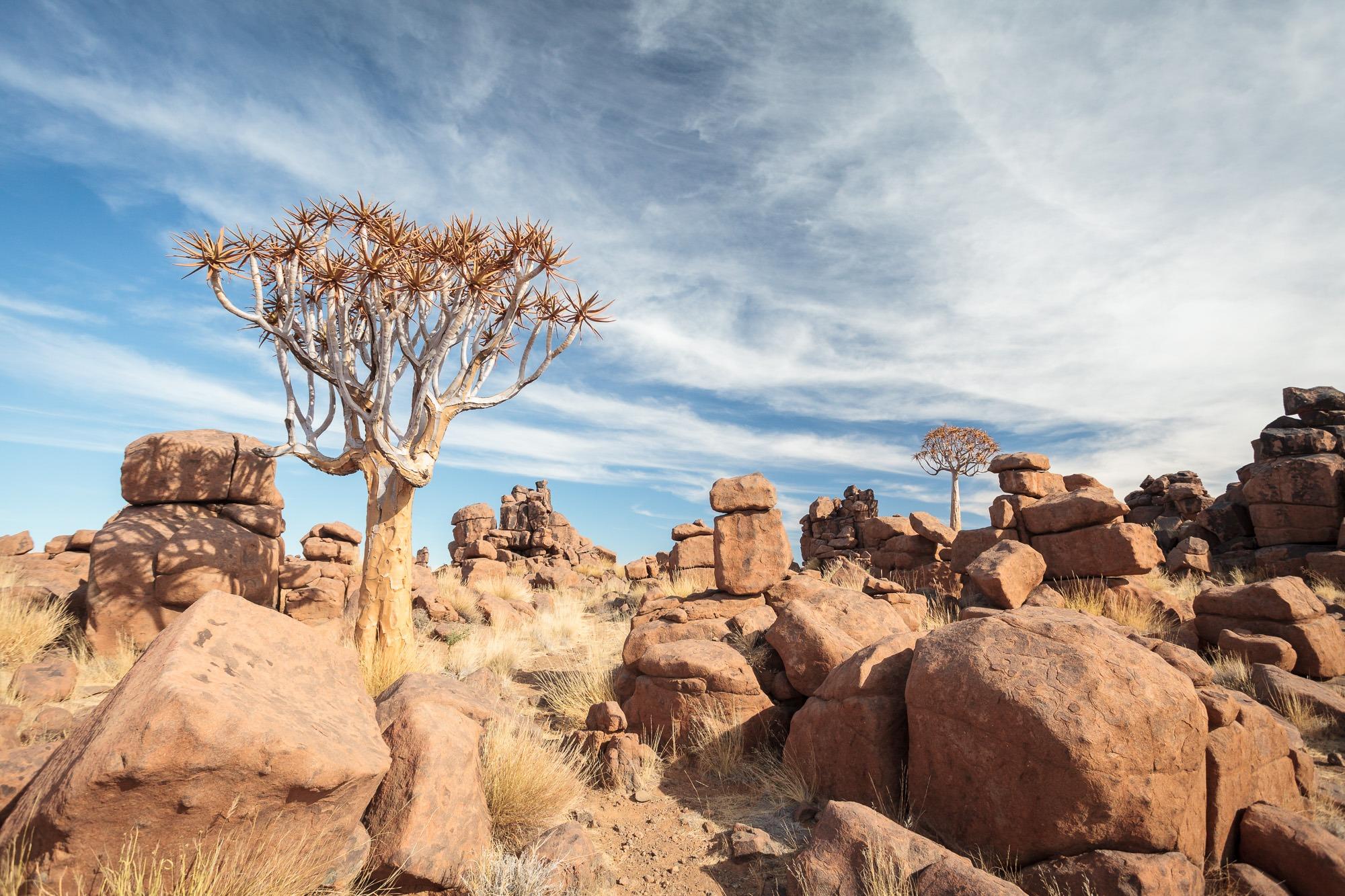 Köcherbäume und Felsen Giants Playground Namibia