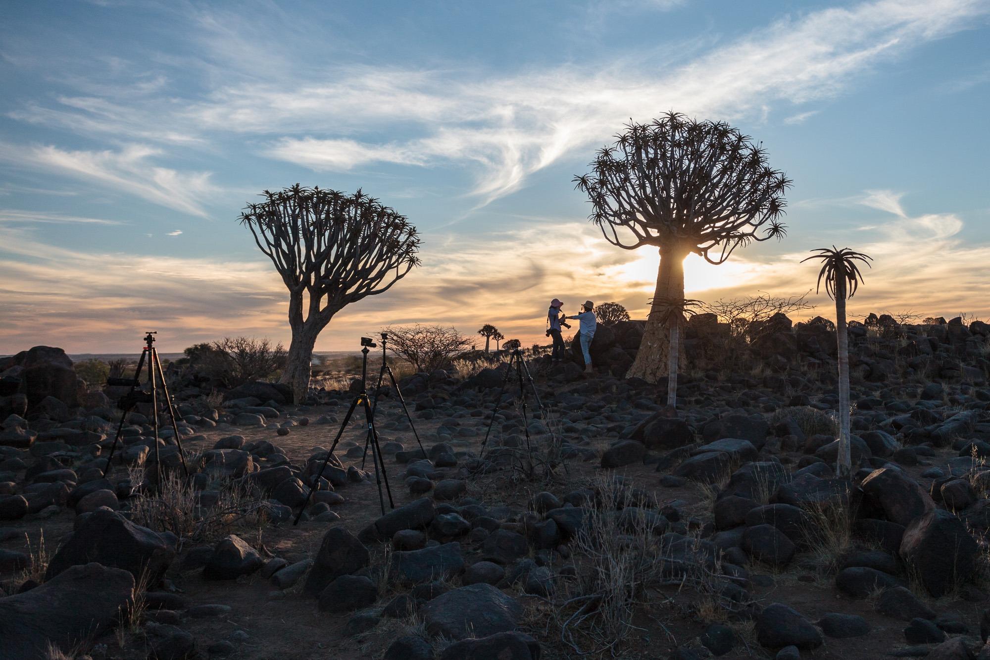 Stative im Quivertree Forest Köcherbaumwald Keetmanshoop Namibia