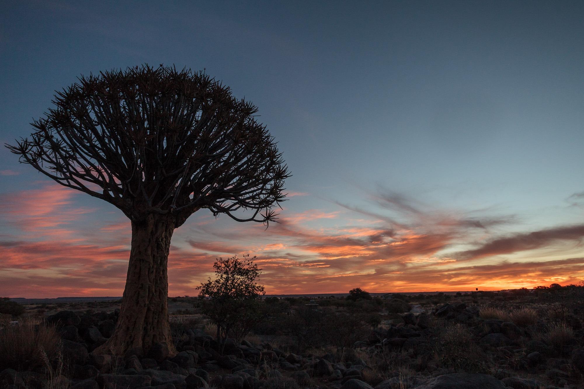 Quivertree Forest Köcherbaumwald Keetmanshoop Namibia