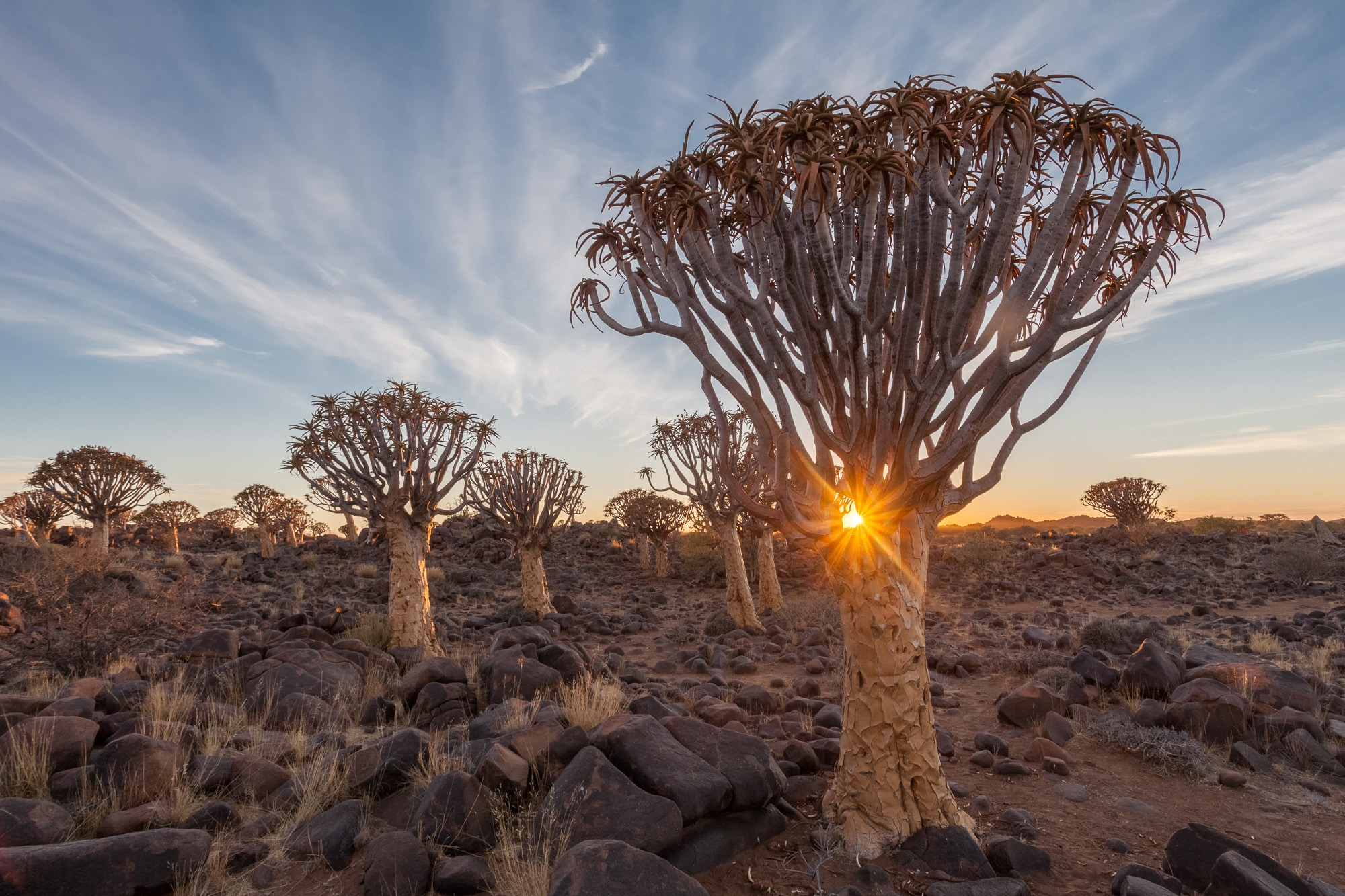 Sonnenaufgang am Köcherbaumwald in Namibia Quiver Tree Forest