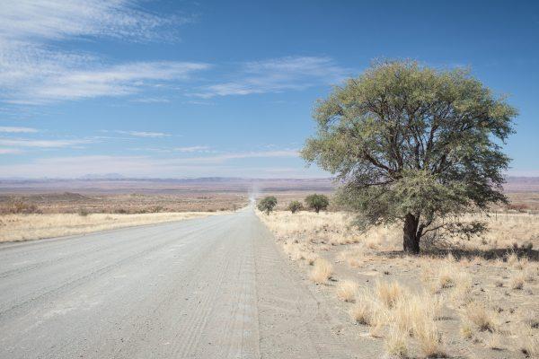 Schnurgerade Schotterpiste mit Baum nahe Keetmanshoop in Namibia