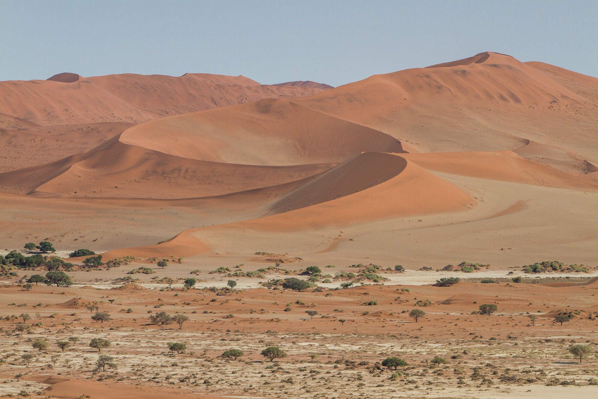 Deadvlei Sossusvlei Namibia Big Daddy