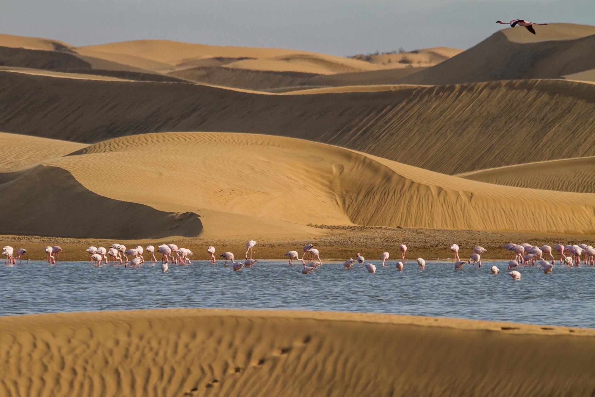 Flamingos in Lagune zwischen den Dünen bei Walvis Bay in Namibia