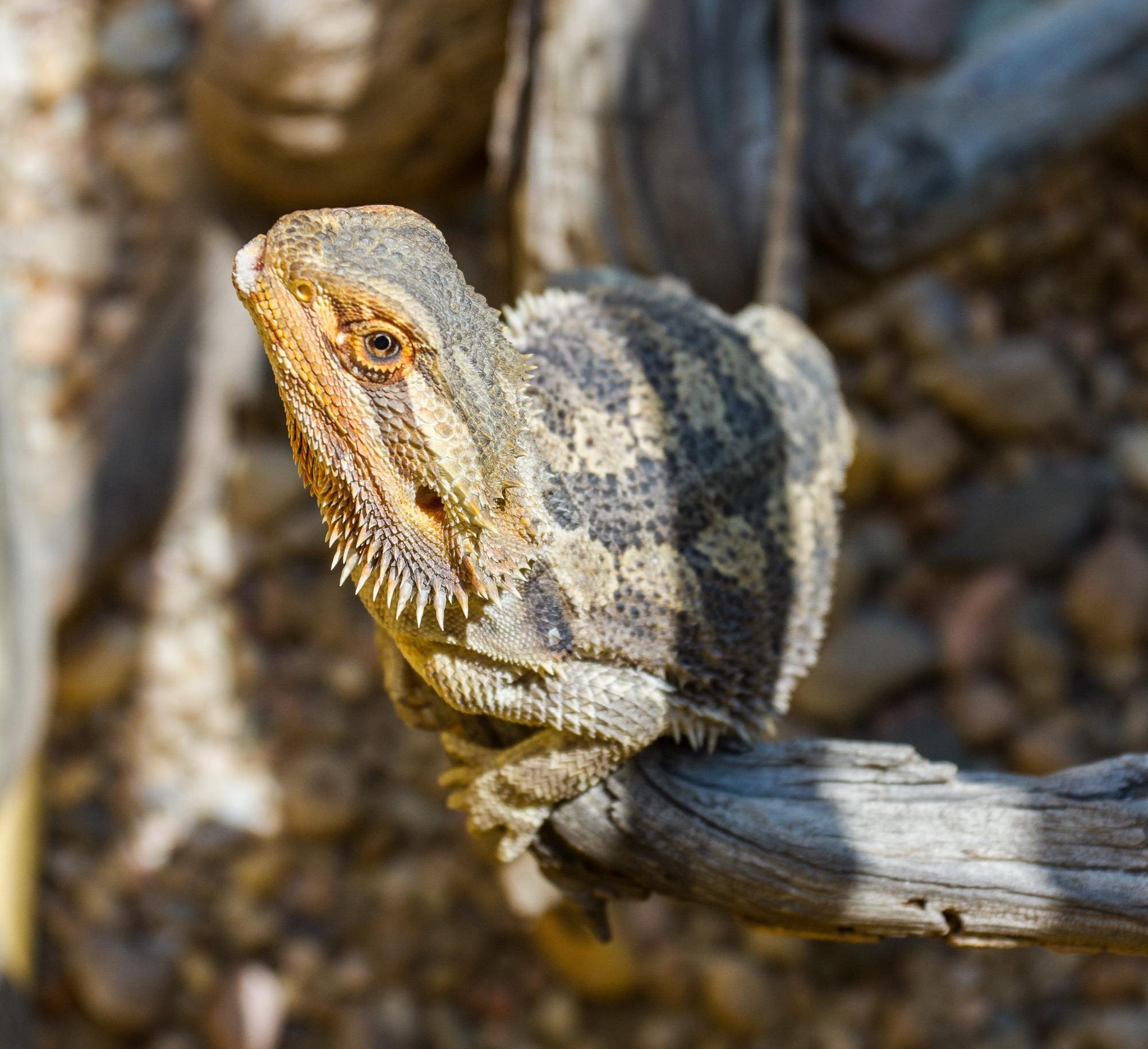 living desert snake park swakopmund namibia
