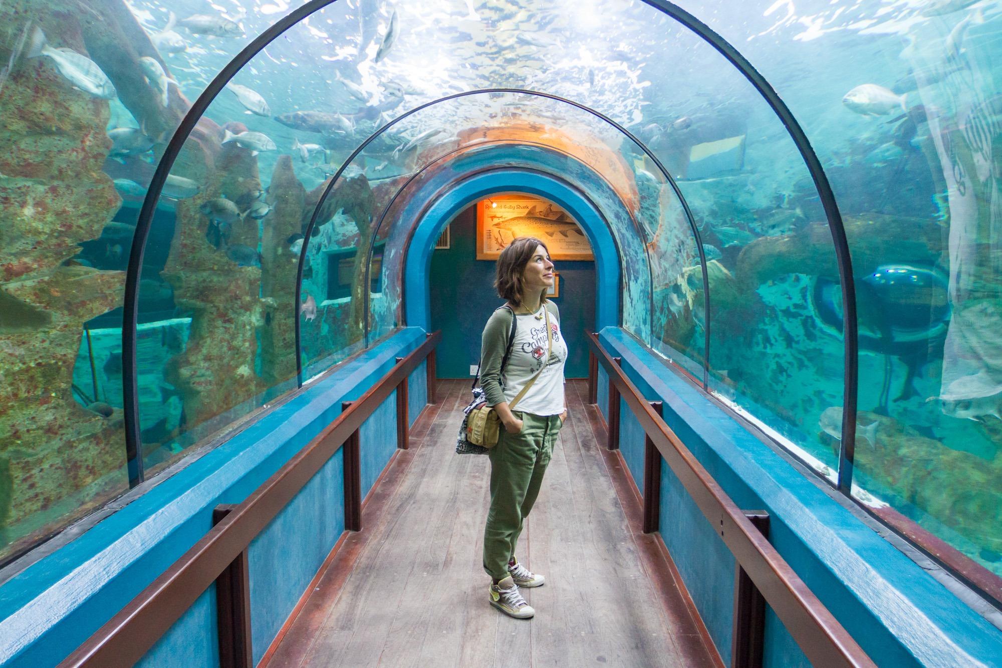 Aquarium Tunnel Swakopmund Namibia
