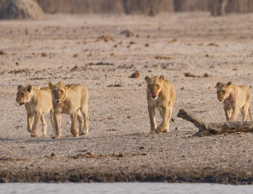 Tag 17: Etosha Nationalpark