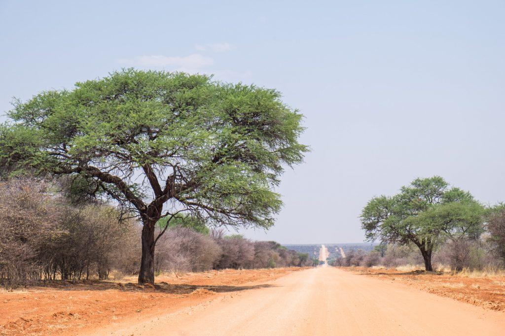 Gerade rote Schotterpiste mit Bäumen am Straßenrand in Namibia