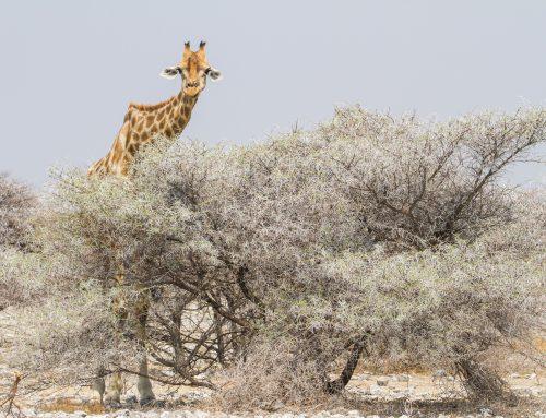 Tag 18: Etosha Nationalpark